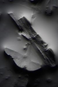 allismicrobody (18)