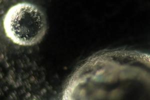 allismicrobody (34)