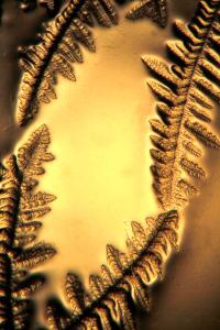 allismicro Microla