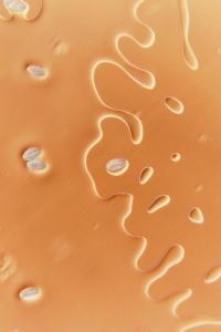 elder pollen